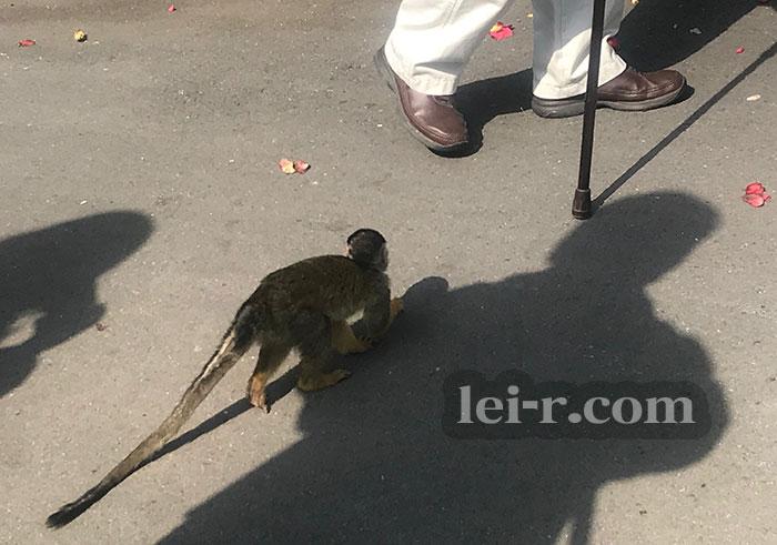 伊豆シャボテン動物公園のリスザル