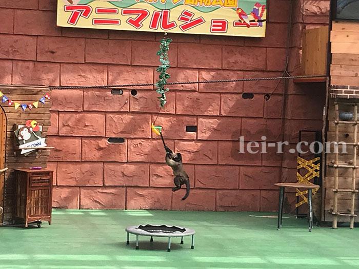 伊豆シャボテン動物公園のアニマルショー